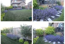 blue and chartreuse garden