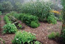 Garden ideas / by Emilee Fortner