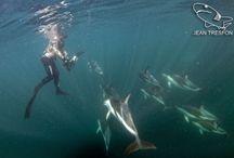 Underwater Photographers / Underwater photographers we love!