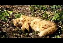 Favorite Videos / by Walter Fano