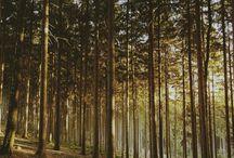 Landschaften und Natur