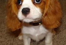 Future Doggy