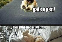 Dogs / The things i love!!!