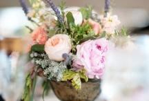 bloom / by Laura Howard