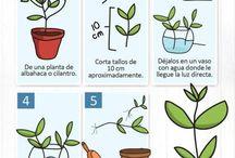 Germinar plantas