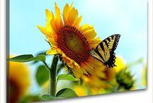 Frühingsmotive auf Leinwand / Frühlingsmotive als hochwertige Kunstdrucke auf Leinwand gedruckt.