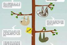 Sloth/Rainforest Project