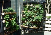 Gardening/Aeroponics/Hydroponics