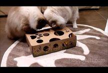 Cat Forging Toys