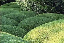 Jardines Topiarios