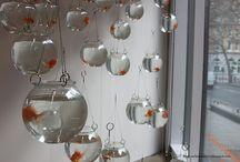 Goldfish / Koi