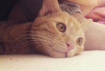 Svět kočičích tlapek
