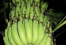 กล้วย ( BANANA ) / รวม กล้วย ไทยทุกพันธุ์ ก่อนสูญหายนะครับ