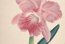 Láminas flores