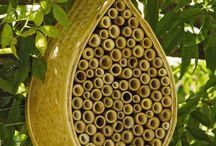 Zahrada_Bumblebee