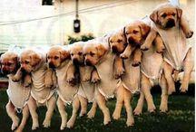 Puppies! / by Kristina Johnson