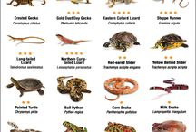 Reptilian/Amphibian Care