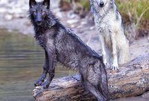 ulver <3