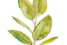 나뭇잎수채화
