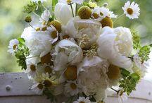 fiori, piante e....natura...
