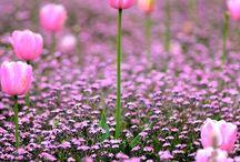 Field of Flowers / Flowers