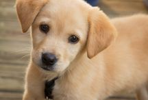 B&B Pet Stop: Dogs