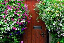 hearth and home / by Rosemarie Forrester