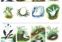 Ympäristö; Linnut