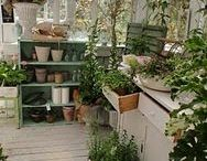 Cute Potting Sheds / by Alexis Clayton