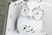 Hoot / by Michelle Johnson