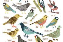 Illustration : : birds