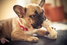 Dogs / by Danny Gordon
