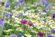 Wildblumen und Hecken