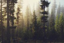 Příroda.