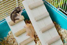 Hamster Info/DIY