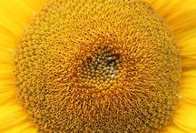 bloemen dichtbij / close ups van bloemen en planten