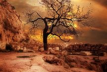 Trees / Photography of trees...