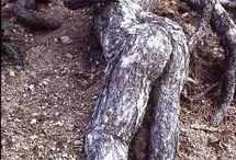 àmazing trees