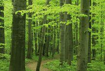 stromy żivota