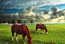 Greener Pastures  / There will always be greener pastures to look forward to