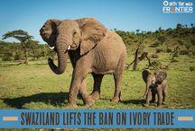 Stop Animal Trafficking