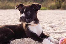 Morrocco Method Pets / Blog Posts, Natural Care Tips, DIY and Cute Pet Photos!