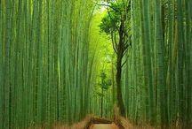 Landscape - Forest