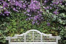 Garden Encyclopedia / Flowers & Trees