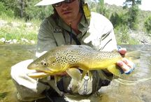 Videos / A collection of some of the best videos on fly fishing, pheasant hunting, Utah and the outdoors in general.