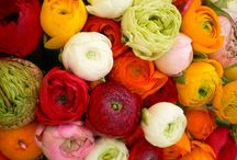 Flowers / Bouquet and center pieces