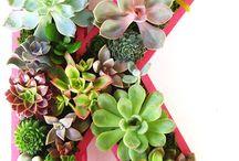 Alphabet Succulent / アルファベットの多肉植物