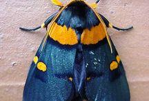 Moths . Butterfly . Beetles +