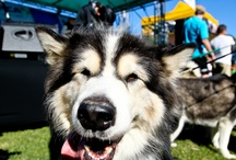 Eventful fun / The laughter, love and fun at RSPCA events!