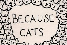Cats  / The wonderful world of cats.